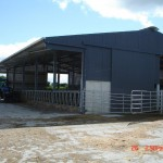 Cow Cubicle Shed