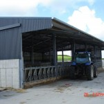 Cow Cubicle Shed 2